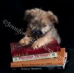 Bookworm Puppy